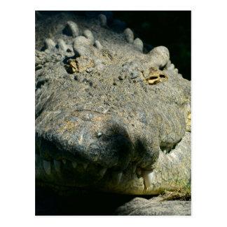 grrr gator chomp postcard
