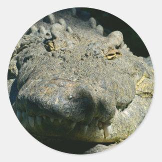 grrr gator chomp round sticker
