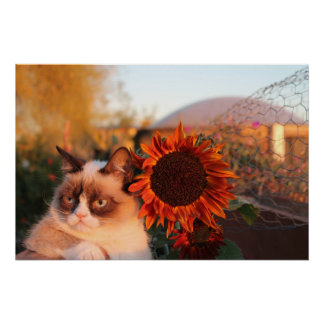Grumpy Cat Sunflower Poster