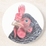 Grumpy Chicken Funny Frowning Hen Photo