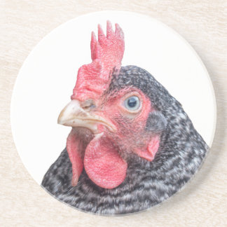 Grumpy Chicken Funny Frowning Hen Photo Drink Coasters