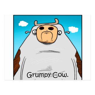 Grumpy Cow Postcard