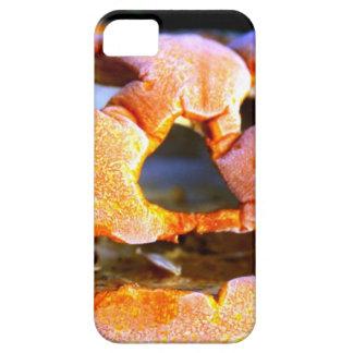 Grumpy Halloween Pumpkin iPhone 5 Covers