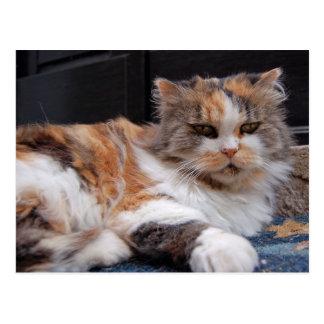 Grumpy Kitty Photo Postcard