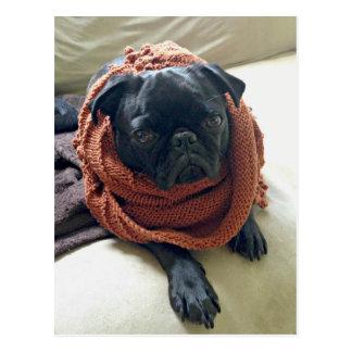 Grumpy Pug Postcard