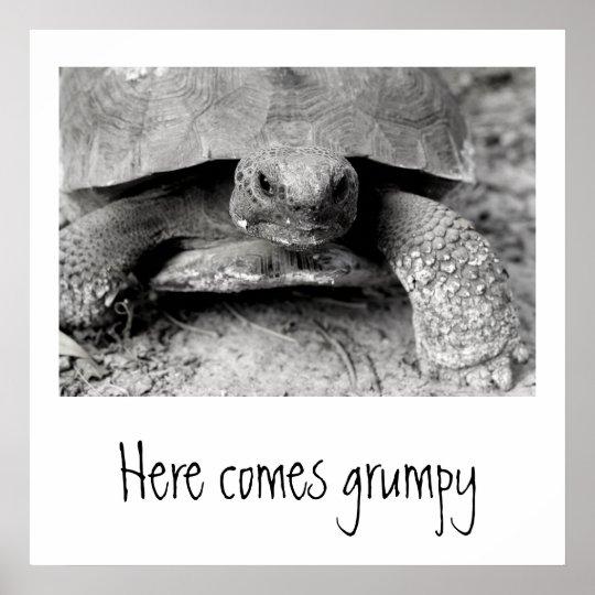 Grumpy Turtle Print