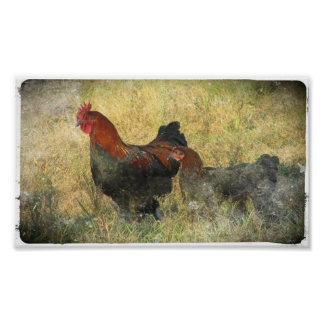 Grunge Canvas Black Copper Marans In Field Poster