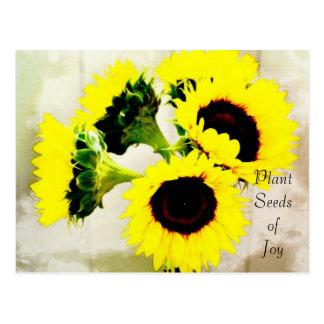 Grunge Sunflowers Joy Postcard