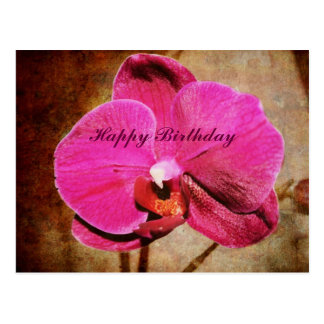 Grungy Pink Phalaenopsis Orchid Postcard