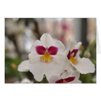 Grußkarte weiße Orchidee
