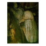 Grutas de la Estrella Cave Formation PICT0121A Post Card