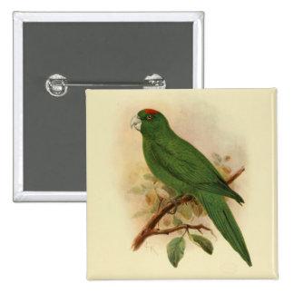 Guadeloupe Parakeet Extinct 1908 15 Cm Square Badge