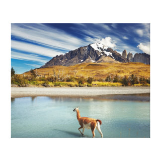 Guanaco crossing the river in Torres del Paine Canvas Print