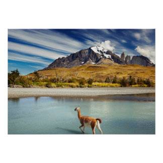 Guanaco crossing the river in Torres del Paine Poster