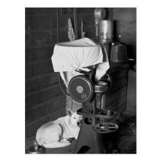 Guarding the Cream Separator, 1936 Postcard