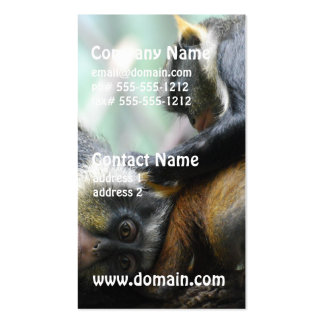 Guenon Monkeys Business Cards