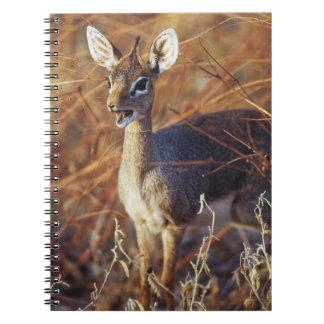 Guenther's dik-dik standing notebooks