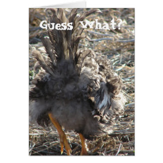Guess What?  Chicken Butt Greeting Card