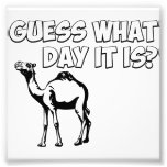 Guess What Day it Is? Hump Day Camel Photograph