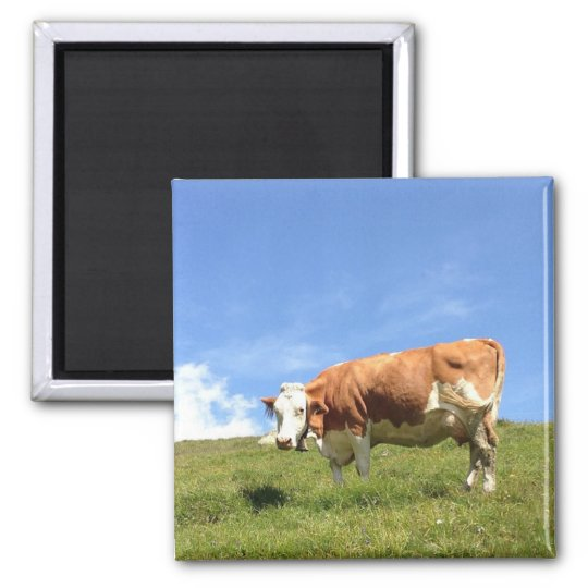 Guesthouse far view - cow magnet
