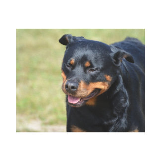 Guileless Rottweiler Stretched Canvas Prints