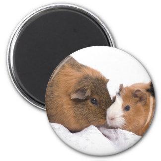 guinea pig 6 cm round magnet