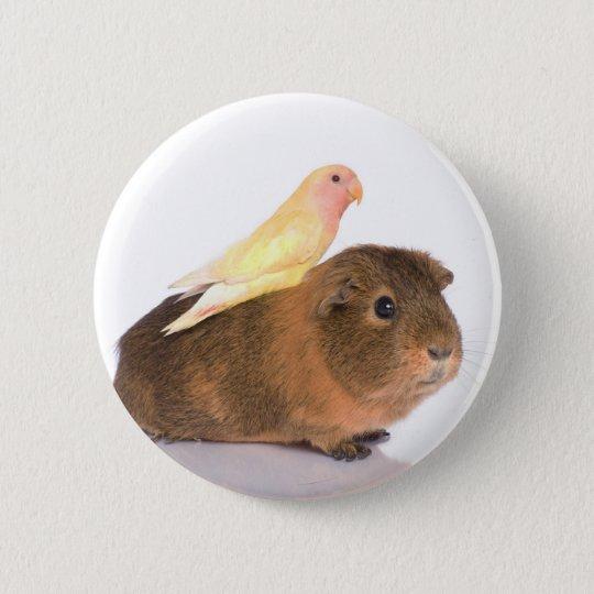 guinea pig and yellow bird 6 cm round