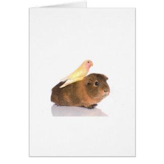 guinea pig and yellow bird greeting card