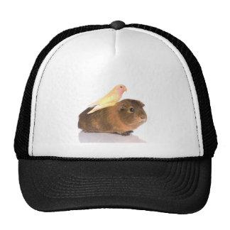 guinea pig and yellow bird mesh hat