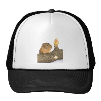 guinea pig and yellow bird trucker hats