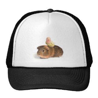 guinea pig and yellow bird trucker hat
