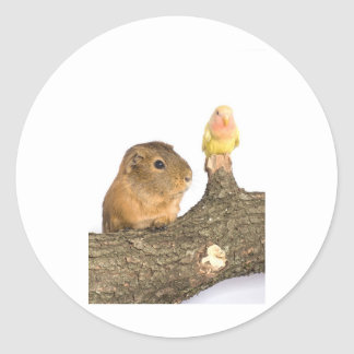 guinea pig and yellow bird stickers