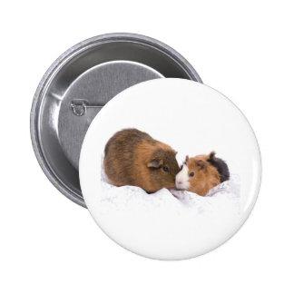 guinea pig pinback buttons