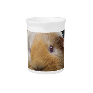 Guinea pig beverage pitchers