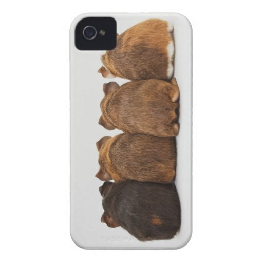 Guinea Pig Butts Iphone4 case iPhone 4 Case : Zazzle