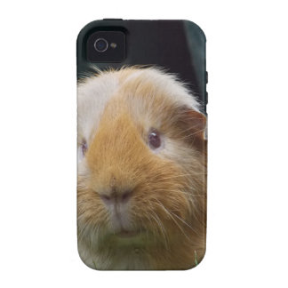 Guinea pig vibe iPhone 4 cases