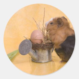 guinea pig classic round sticker