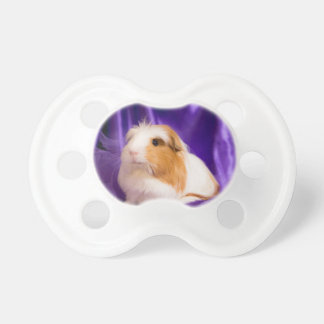 guinea pig pacifier