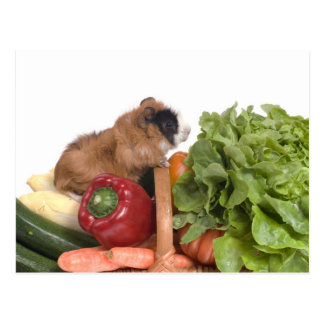 guinea pig in a basket of vegetables postcard