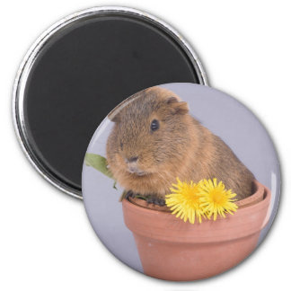 guinea pig in a flowerpot 6 cm round magnet