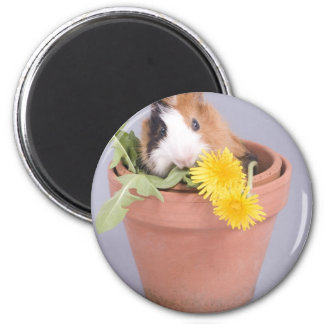 guinea pig in a flowerpot 6 cm round magnet