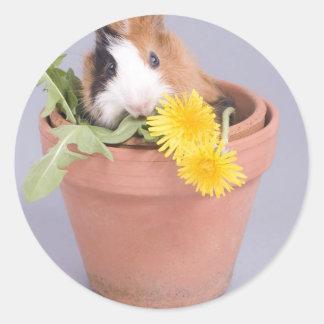 guinea pig in a flowerpot classic round sticker