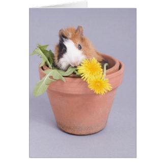 guinea pig in a flowerpot greeting card