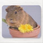 guinea pig in a flowerpot mousemat