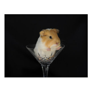Guinea pig in a wine glass postcard
