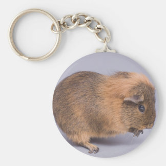guinea pig, keychains