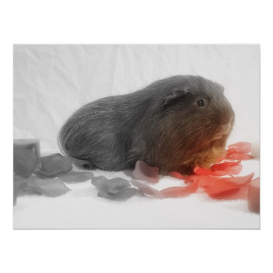 Guinea Pig Love Poster