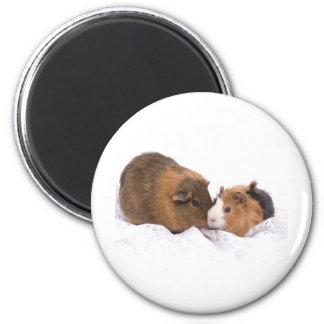 guinea pig refrigerator magnets