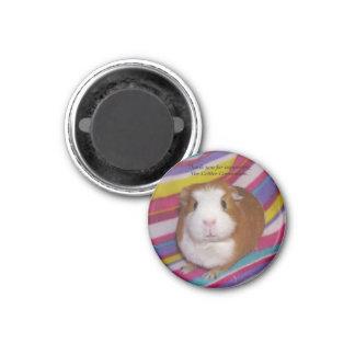 Guinea Pig Magnet #3