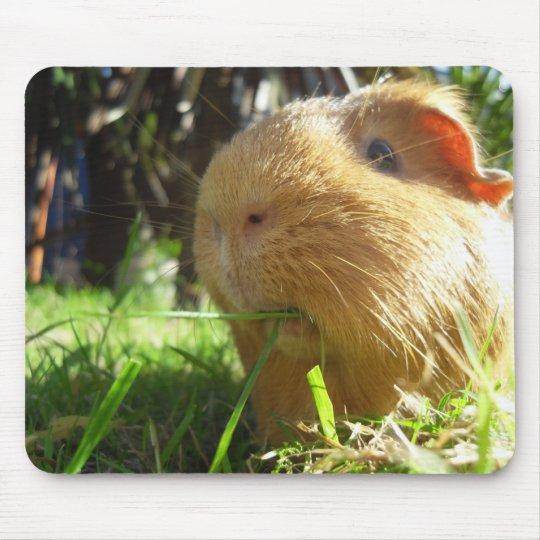 Guinea pig Mouse-pad Mouse Mat